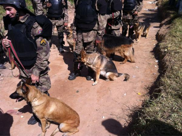 Os cães contra o povo