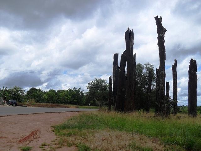 Los troncos secos indican el lugar donde se cometió la masacre de Eldorado dos Carajás