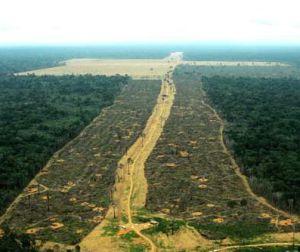 Desmatamento generalizado no Estado do Pará.